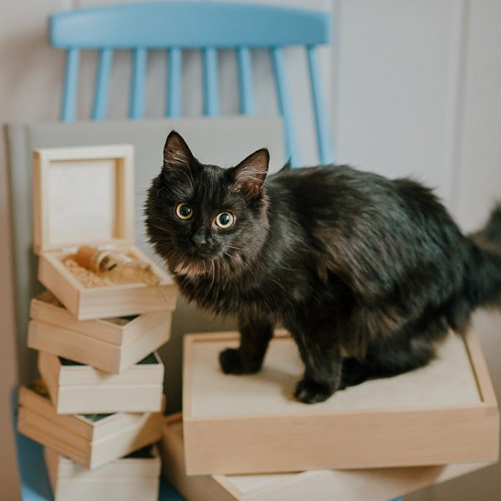 kot-sprawdza-albumy